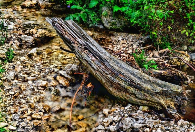 Flödande ström i skogen arkivbild