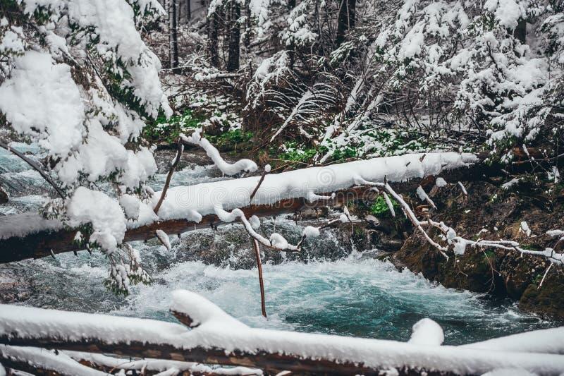 Flöden för en ström över ett vinterberglandskap med de dråsade-ner träden täckte med ny snö royaltyfria foton