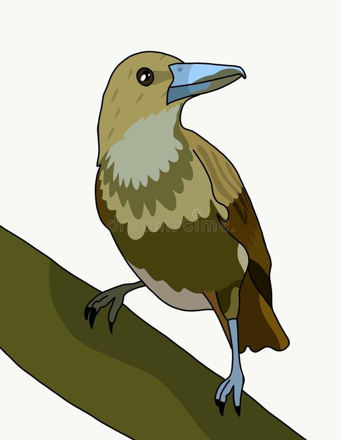 Flöjtfågeln royaltyfri illustrationer