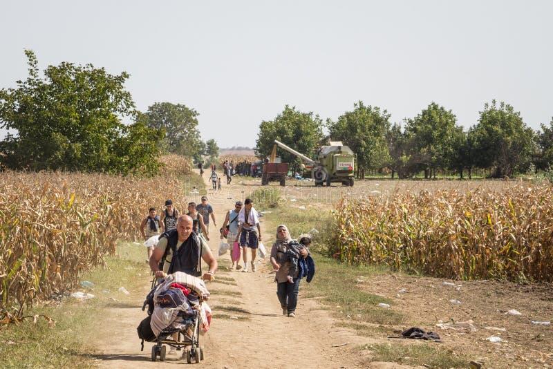 Flüchtlinge, die durch die Felder nahe der Grenze Kroatiens Serbien, zwischen die Städte von Sid Tovarnik auf dem Balkan-Weg gehe lizenzfreie stockfotos