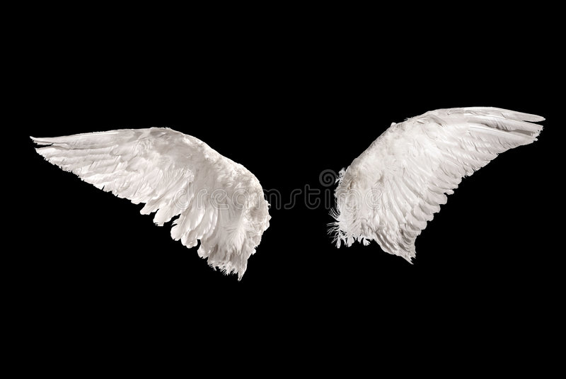 Flügel über Schwarzem lizenzfreies stockfoto