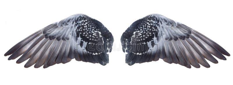 Flügel lizenzfreies stockbild