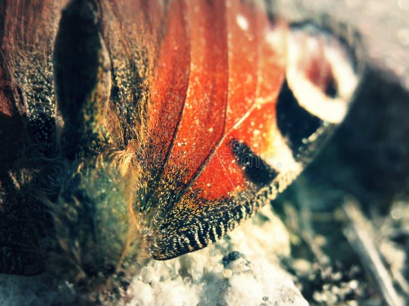 Flügel des Schmetterlinges stockbild