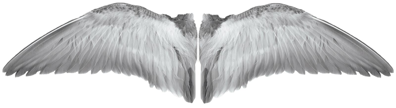 Flügel des Vogels stock abbildung