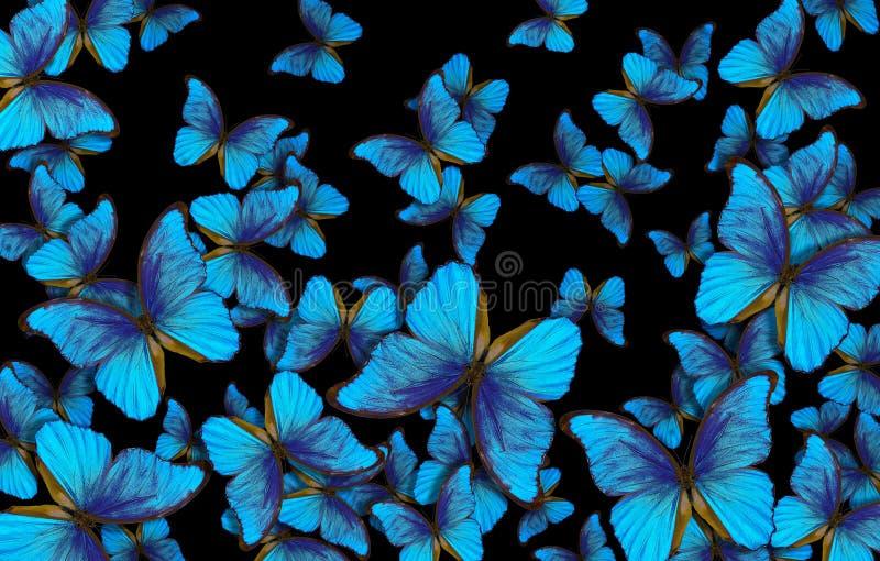 Flügel eines Schmetterling Morpho-Beschaffenheitshintergrundes stockbilder