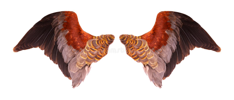 Flügel von Vögeln auf einem weißen bacground lizenzfreie abbildung