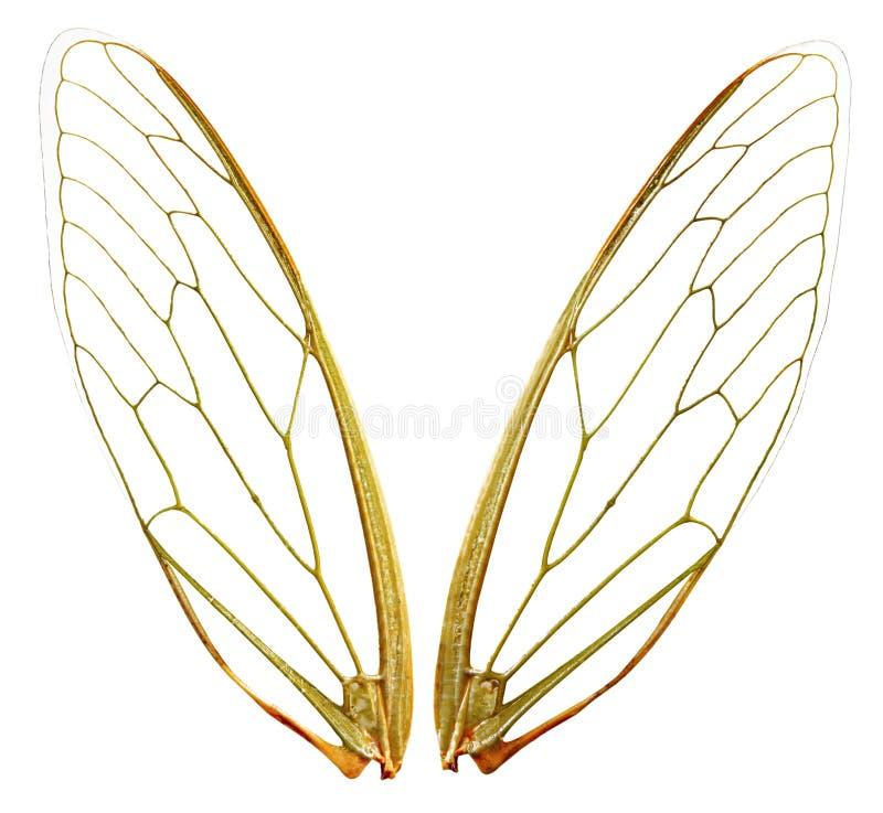 Flügel (wth Pfad) stockfotos
