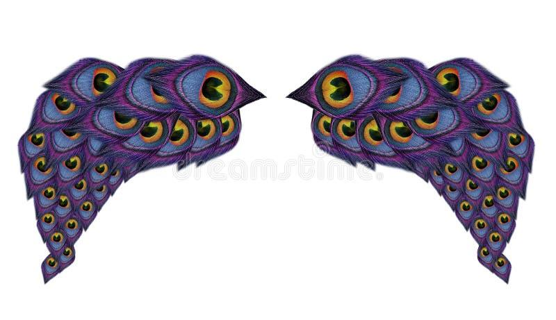 Flügelpfaufedern auf weißem Hintergrund stockfoto