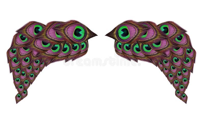 Flügelpfaufedern auf weißem Hintergrund stockbild