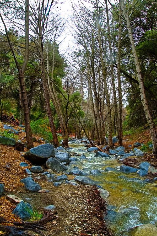 Flüssiger Fluss weg von der Angeles-Kammlandstraße Hat einen Blick des pazifischen Nordwestens nach den neuen Regen in Los Angele lizenzfreie stockbilder