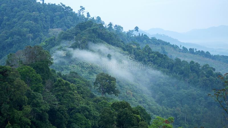 Flüssiger Nebel bewegt auf Gebirgstropischen Regenwald in Phangnga t wellenartig lizenzfreie stockbilder