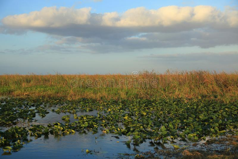 FL Everglades landscape image of sawgrass. stock image