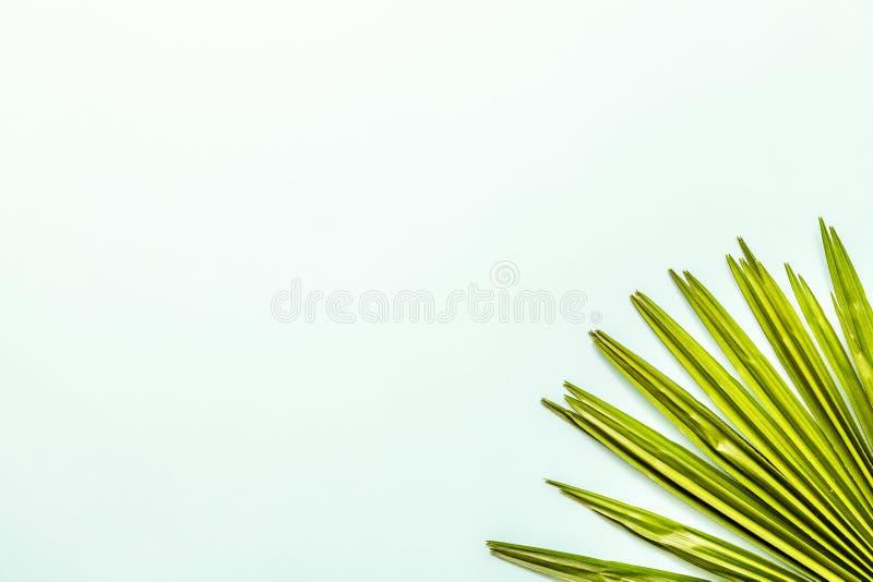 Flache gelegte Einzelteile der Reise: Palmblatt, das auf grünem Hintergrund liegt Platz f?r Text Beschneidungspfad eingeschlossen lizenzfreie stockfotografie