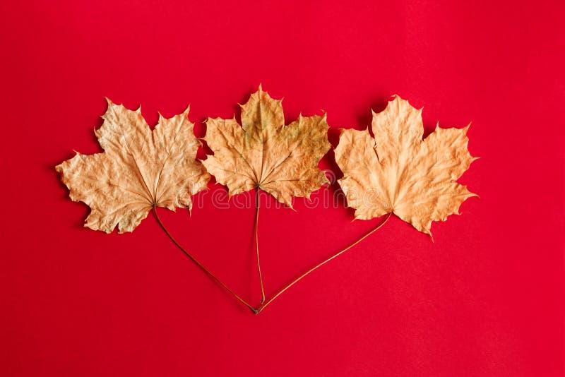flache gelegte Herbstzusammensetzung mit Ahornblättern stockbilder