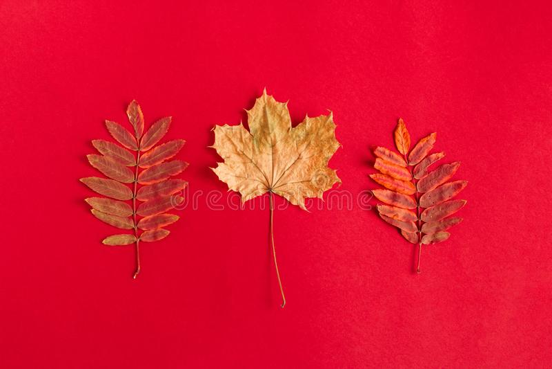 flache gelegte Herbstzusammensetzung mit getrocknetem Herbstlaub stockbild