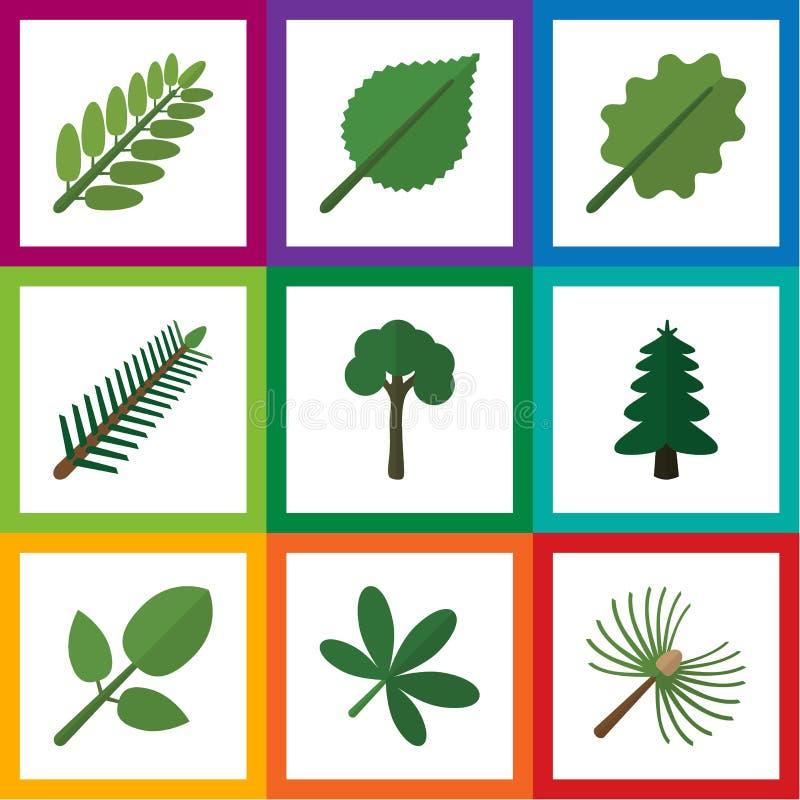 Flache Ikonen-natürlicher Satz Immergrün, Park, Erle und andere Vektor-Gegenstände Schließt auch Akazie, Blatt, Baum-Elemente mit lizenzfreie abbildung