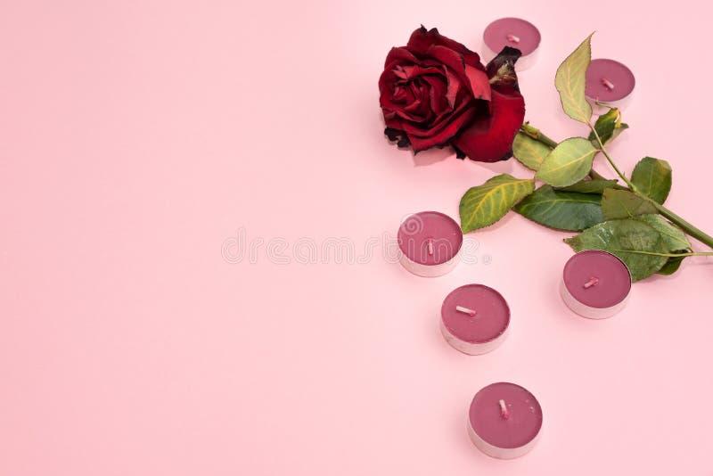 Flache Lage des verwelkten und getrockneten Rotes stieg mit purpurroten Kerzen auf rosa Hintergrund lizenzfreie stockfotos