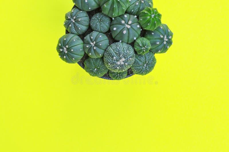 Download Flache Lage Von Kaktuspflanzen Auf Gelbem Hintergrund Stockfoto - Bild von landwirtschaft, dekorativ: 96933170