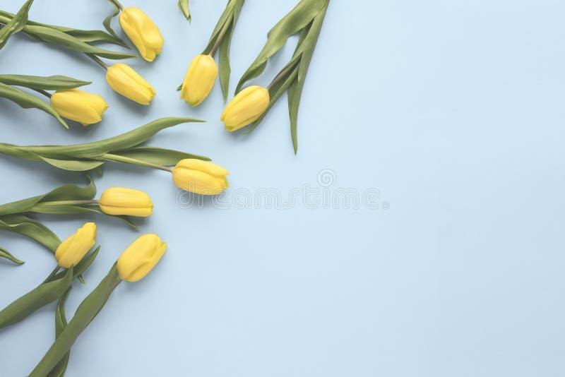 Flache Lagefrühlingsblumen Gelbe Tulpenblumen auf blauem Hintergrund Beschneidungspfad eingeschlossen Minimaler Blumenspott herau stockfoto