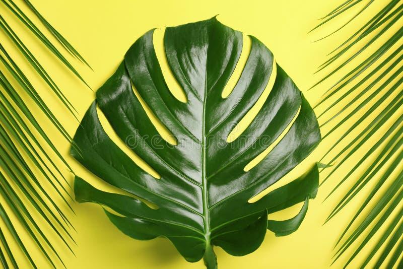 Flache Lagezusammensetzung mit tropischen Blättern lizenzfreie stockfotografie