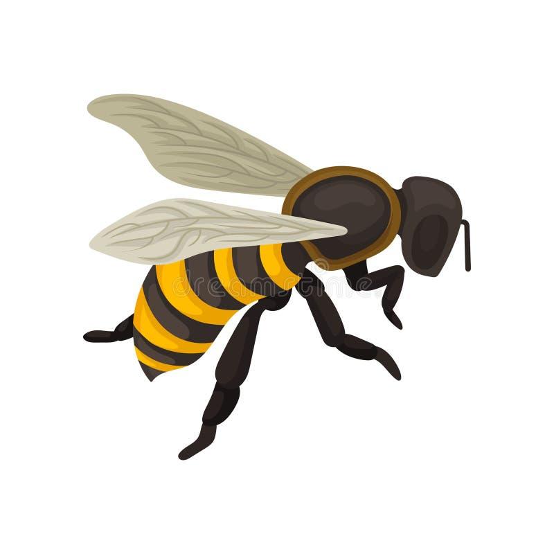 Flache Vektorikone der Biene Fliegeninsekt mit gestreiftem schwarz-und-gelbem Körper Design für Postkarte, Plakat oder Druck vektor abbildung