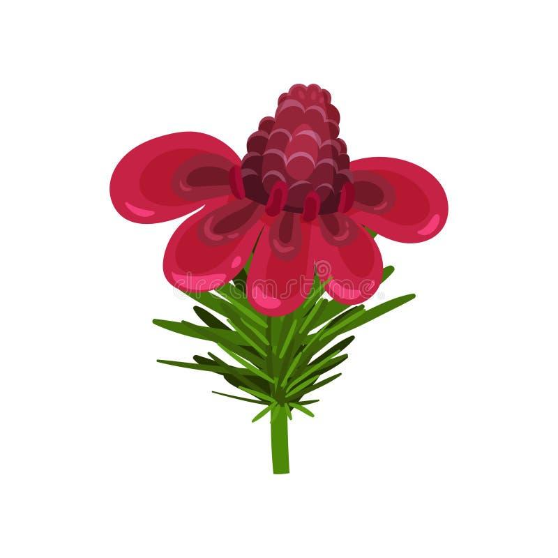 Flache Vektorikone des herrlichen Fackelingwers mit den rosa Blumenblättern Blühende exotische Blume Anlage vom tropischen Garten vektor abbildung