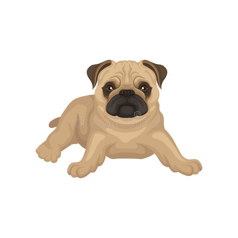 Flache Vektorikone des Pugwelpenlügens lokalisiert auf weißem Hintergrund Kleiner Hund mit beige Mantel, geknitterte Mündung und  vektor abbildung