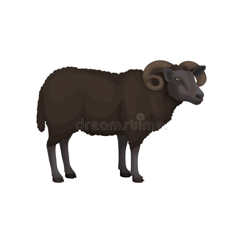 Flache Vektorikone von erwachsenen männlichen Schafen Haustier Wolliger Mantel des Rambrauns und gebogene Hörner Tierhaltung vektor abbildung