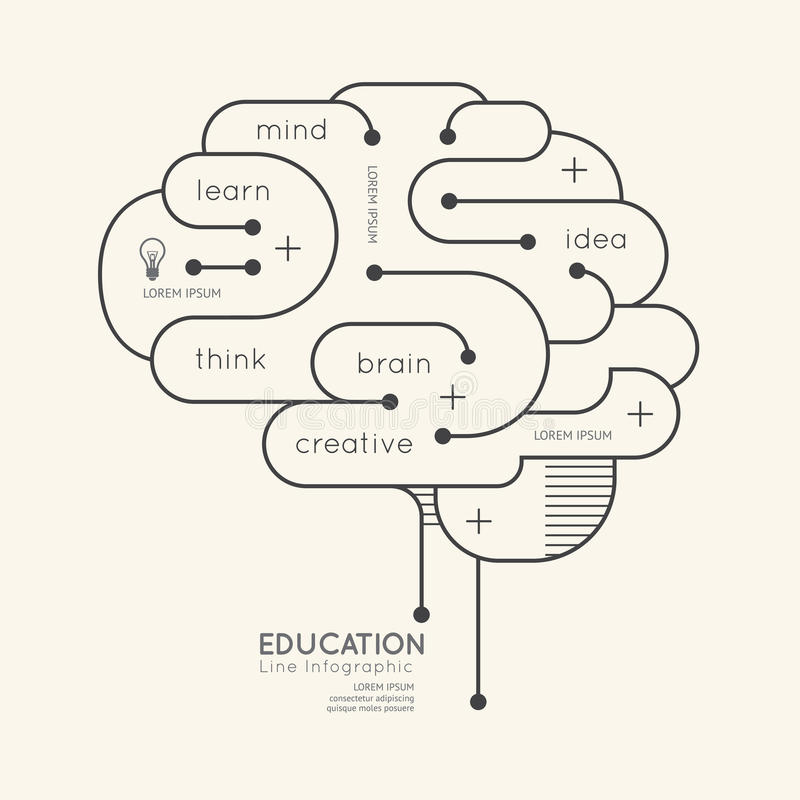 Flacher linearer Infographic-Bildungs-Entwurf Brain Concept Vektor lizenzfreie abbildung
