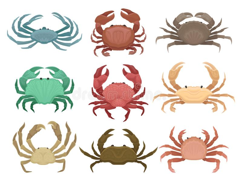 Flacher Vektorsatz bunte Krabben Meerestiere mit Greifern Elemente für Restaurantmenü, Plakat oder Mobile annoncierend vektor abbildung