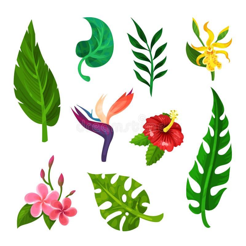Flacher Vektorsatz tropische blühende Blumen und Grünblätter Botanisches oder Gartenarbeitthema Elemente für Buch, Postkarte stock abbildung