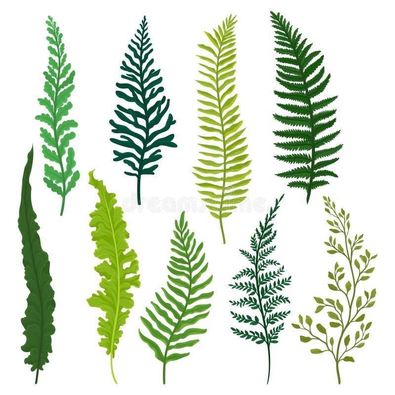 Flacher Vektorsatz verschiedene Arten des Farns Zweige mit hellgrünen Blättern Natürliche Elemente Wilde Waldanlage stock abbildung