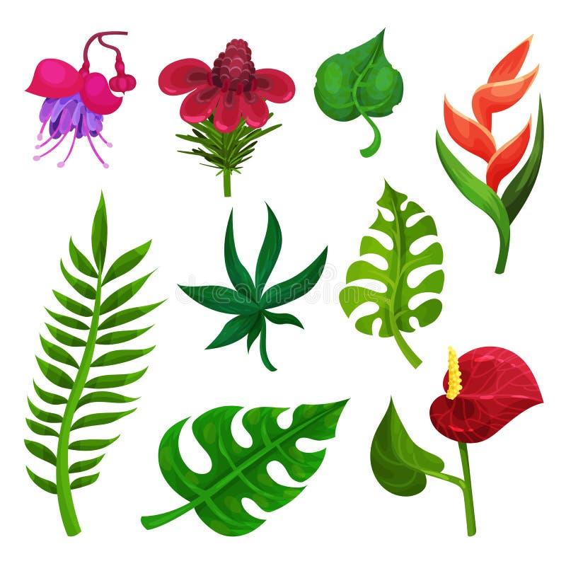 Flacher Vektorsatz verschiedene exotische Blumen und Grünblätter Bäume, die vom See-Wasser wachsen Elemente für botanisches Buch, vektor abbildung
