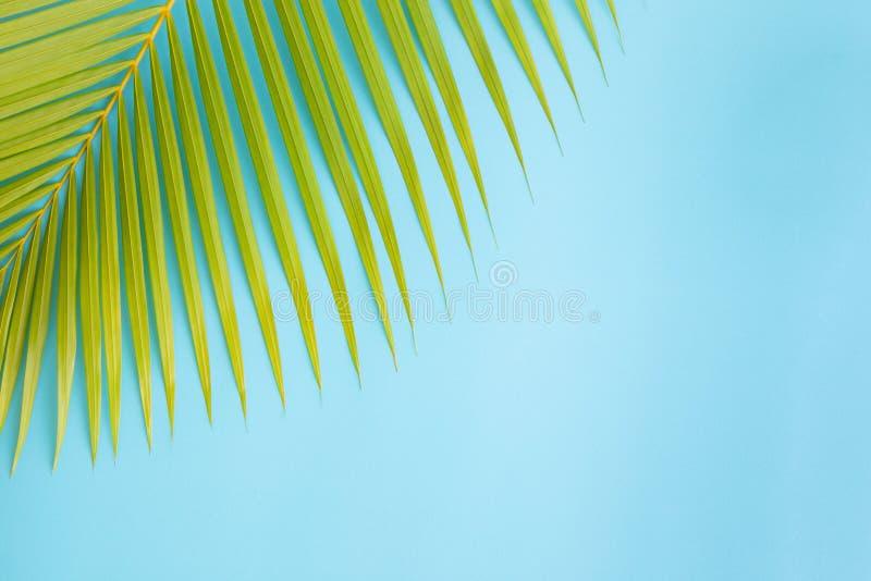 Flaches gelegtes Fotokokosnussblatt auf blauem Hintergrund, Draufsicht und Kopienraum für Montage Ihr Produkt stockfotografie