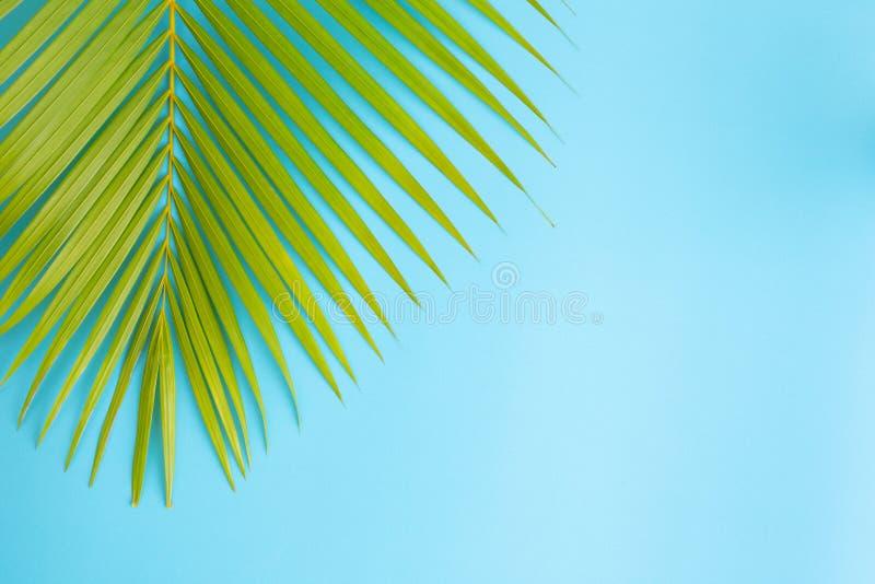 Flaches gelegtes Fotokokosnussblatt auf blauem Hintergrund, Draufsicht und Kopienraum für Montage Ihr Produkt stockfoto