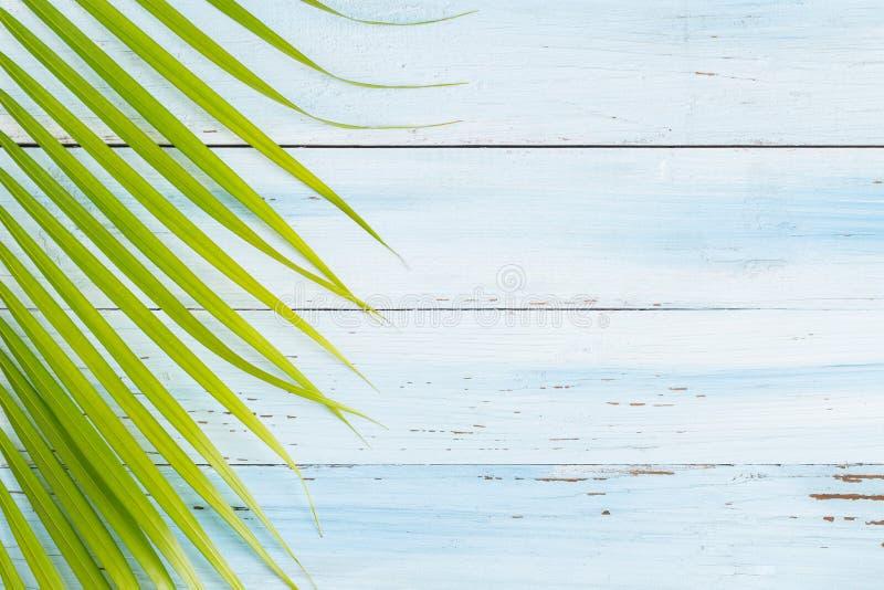 Flaches Lagefoto-Kokosnussblatt auf Purplehearthintergrund, Draufsicht a stockfotografie