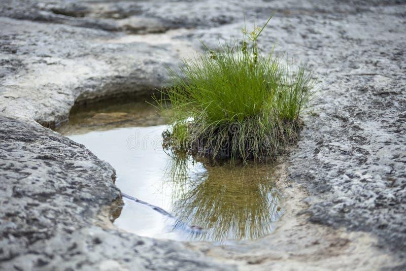 Flaches Wasserbecken im trockenen Gelände stockfotos