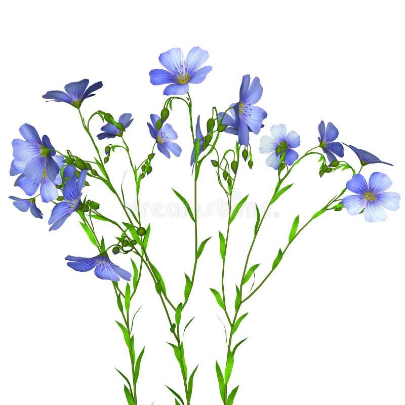 Flachspflanze stock abbildung