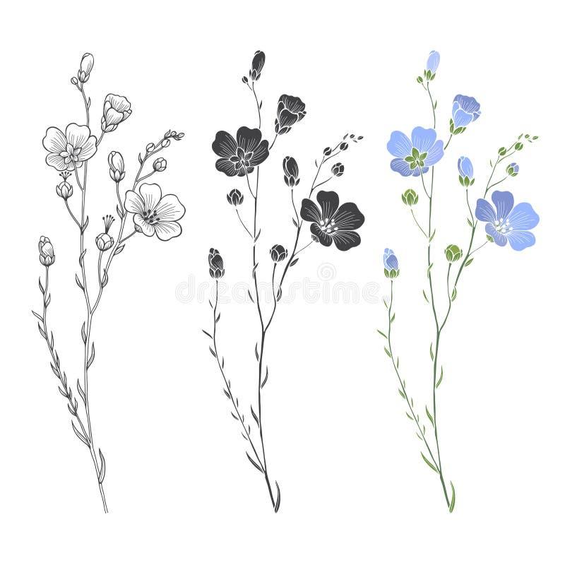 Flachspflanze mit Blumen und den Knospen lizenzfreie abbildung