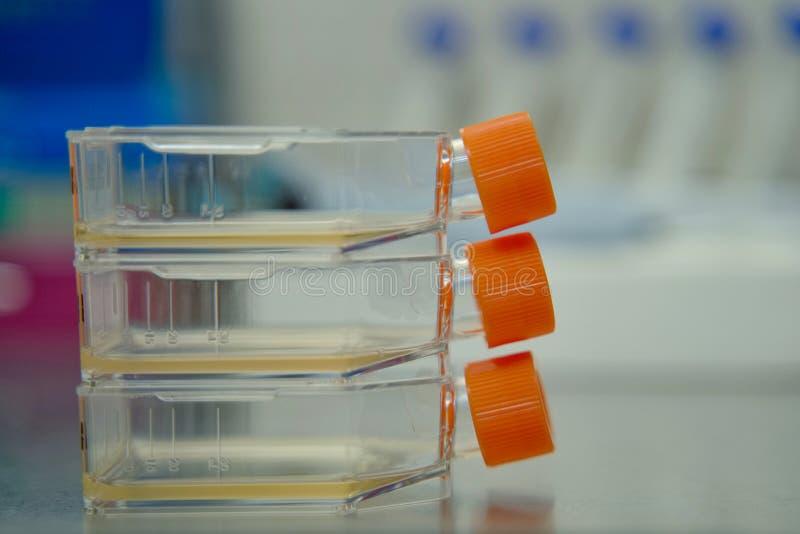 Flacon de culture cellulaire pour des cellules de couches unitaires dans le milieu de culture photos stock