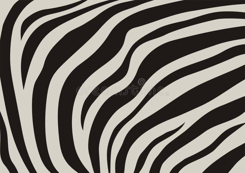 fladruje zebry ilustracja wektor