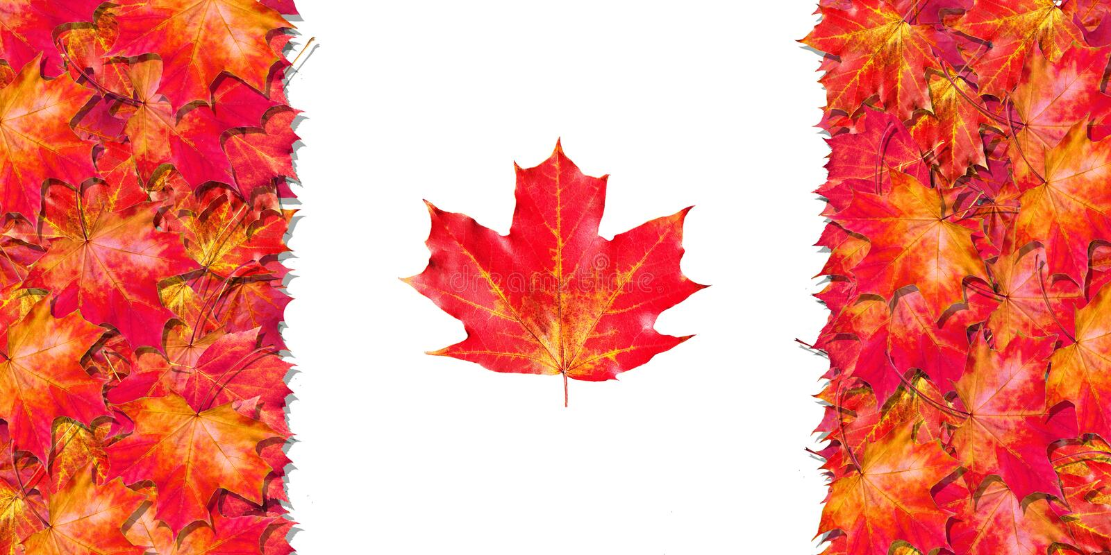 Flag of Canada. Happy Canada Day. Red maple leaves in the shape of the flag of Canada. Bright red autumn leaves. stock images