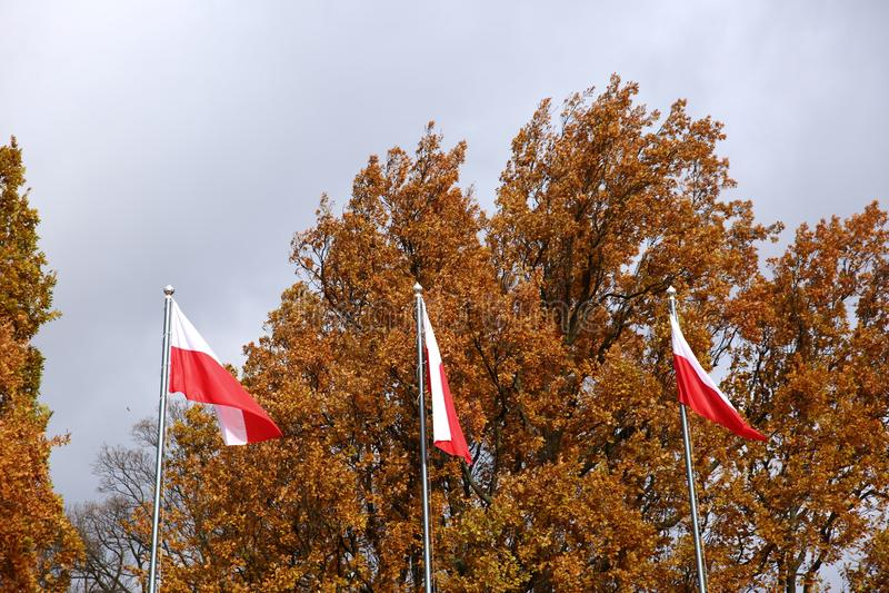 Flaga państowowa Polska zdjęcia royalty free