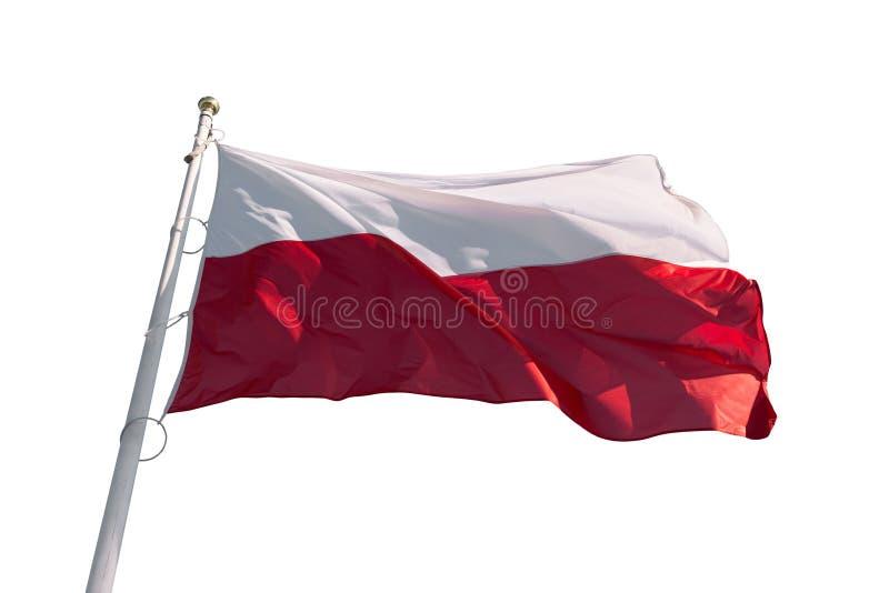 Flaga Polska odizolowywał obrazy royalty free