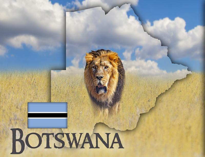 Flagga?versikt av Botswana som ?r p? en bild av ett lejon r Det finns det ?r den nationella afrikanen royaltyfri bild