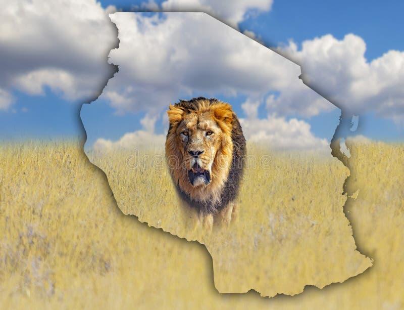 Flaggaöversikt av Tanzania som är på en bild av ett lejon It& x27; s en lös djur uppehälle i Afrika Det är nationell afrika arkivbild