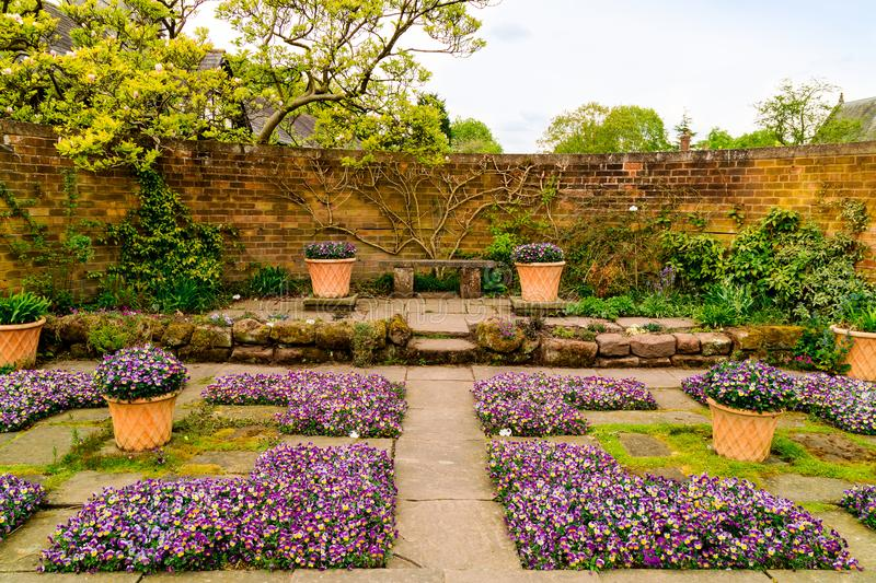 Walled garden with purple viola flowers. Flagged walled garden corner with purple violas on the ground and in terracotta pots royalty free stock images