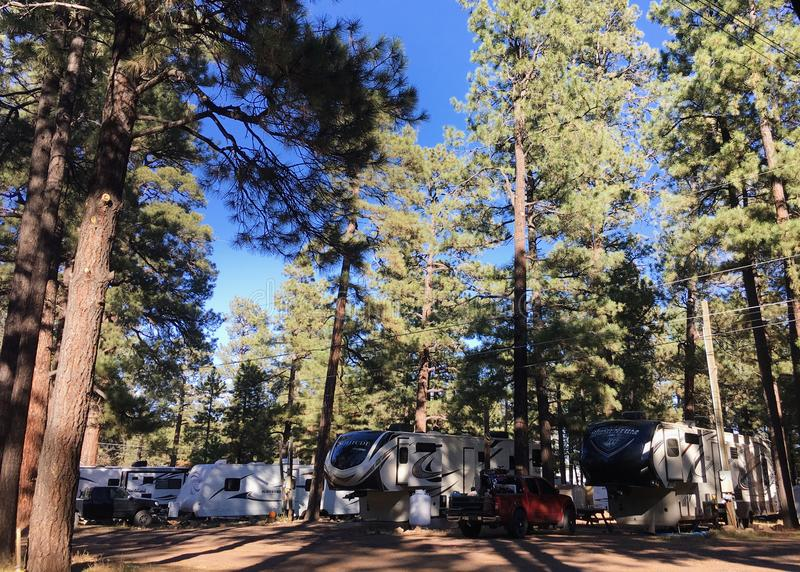 Flagstaff, πάρκο NM rv με τα ψηλά πεύκα στοκ εικόνες