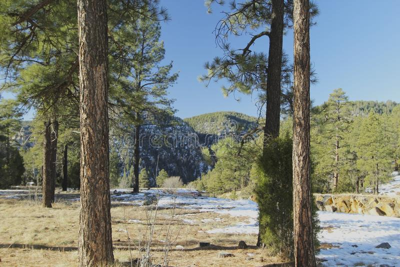 Flagstaff Arizona forest and snow. Snow in the woods in Flagstaff Arizona in December royalty free stock photos