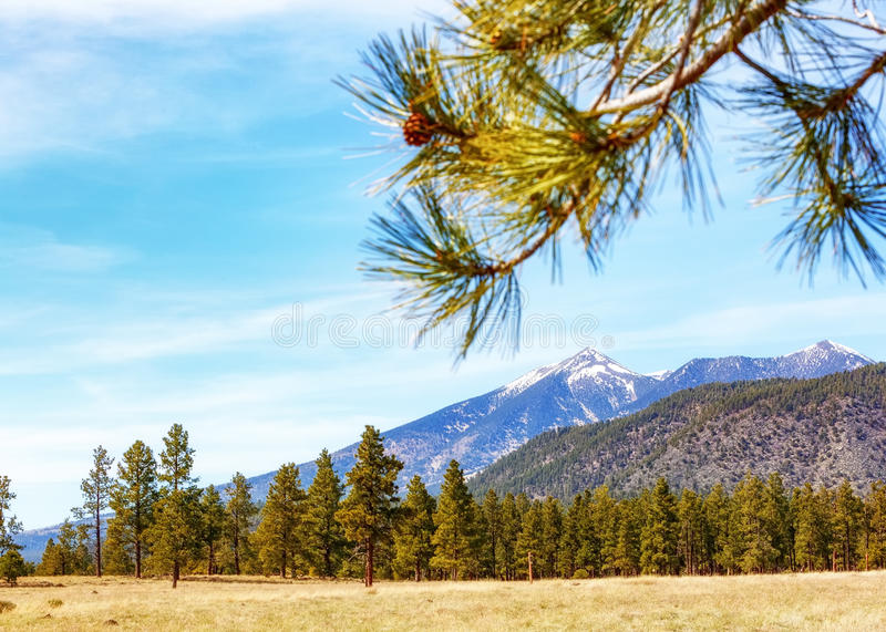 Flagstaff Arizona Mountains and Pine Trees. View from Buffalo Park in Flagstaff, Arizona, USA of pine trees and San Francisco mountain peaks with copy space in stock photography